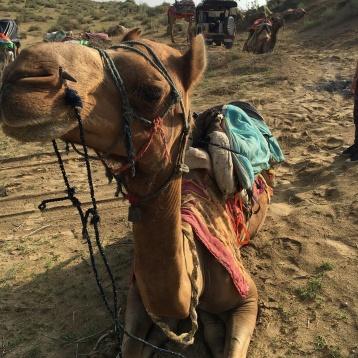 Tourisme-Desert du Thar