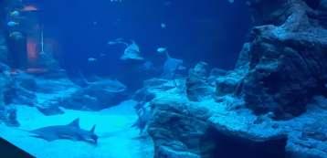 aquarium 20
